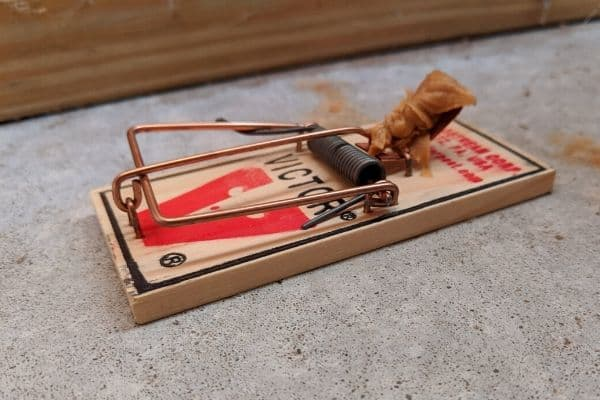 Classic Victor wooden mouse trap
